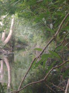 My Beloved Pymmes Brook