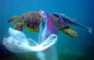 Plastic harms Sea Creatures.