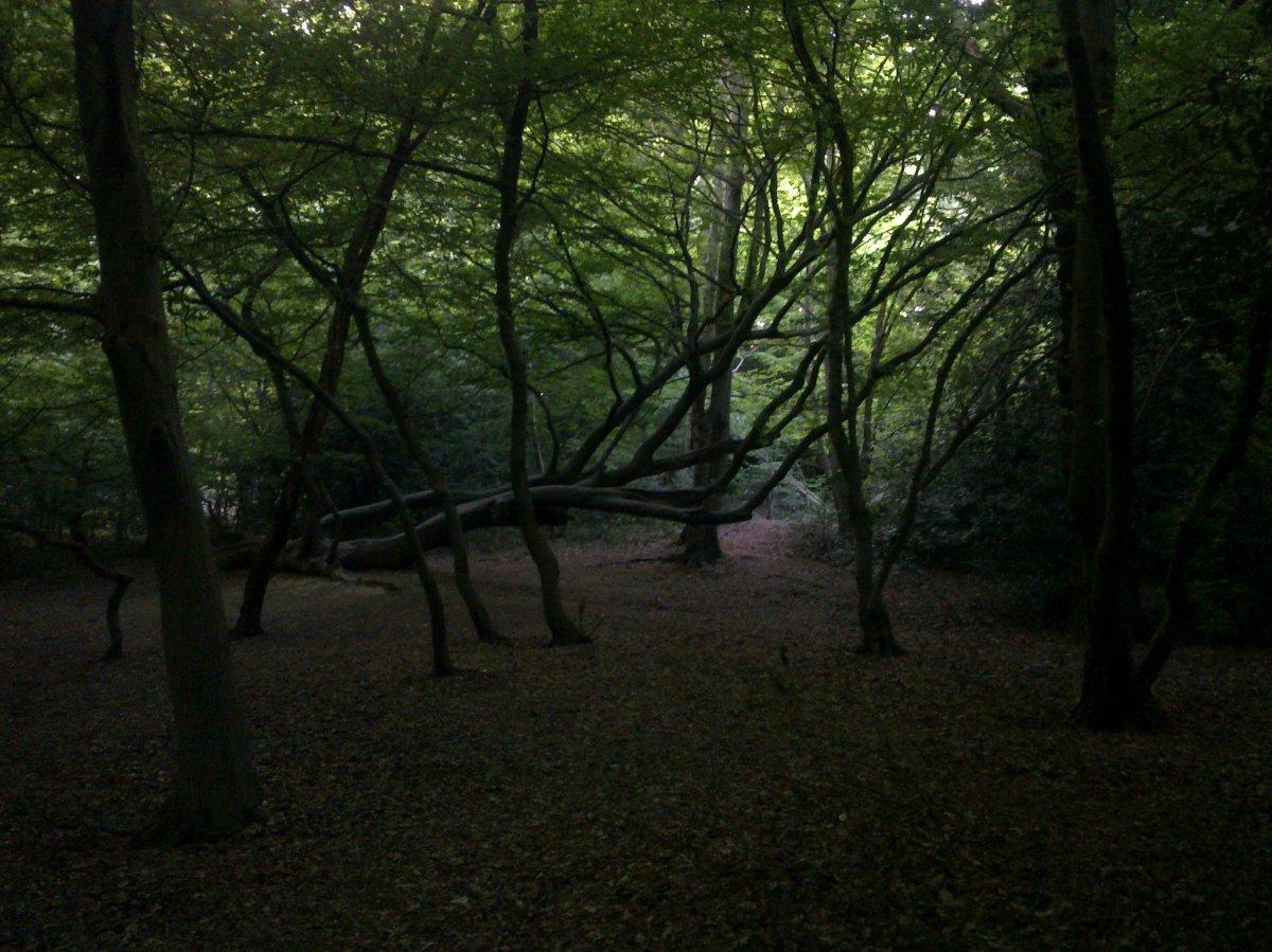 Beautiful Queen's Woods